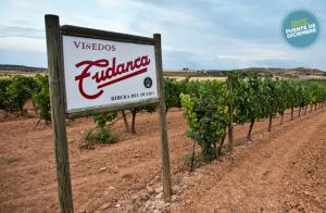 Ribera del Duero: 2 noches+comida+bodega